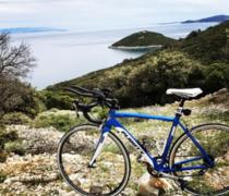 Seagul bike photo